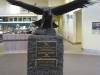Wedge-Tail-Adler